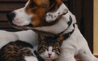 Startuje coroczna przedświąteczna akcja zbiórki dla zwierzat. Przyłączcie się do akcji!